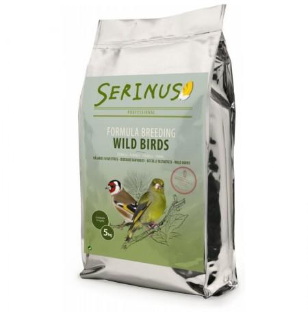 Serinus formula silvestres cría